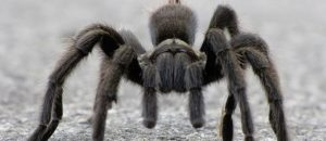 Why Was a Mexico City Restaurant Busted for Serving Tarantula Tacos?
