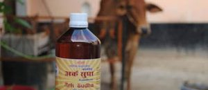 To Your Health: Say 'Cheers' with a Big Glass of … Cow Urine?